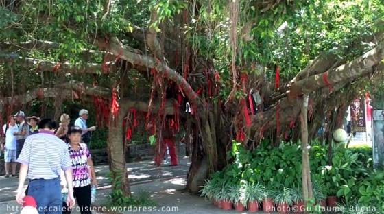 Luhuitou Park - Arbre à voeux - Sanya