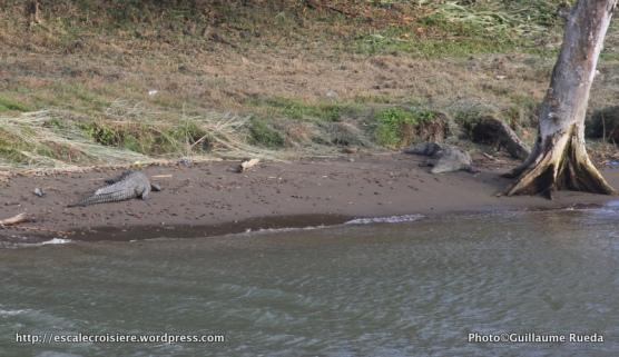 Canal de Panama - Crocodiles