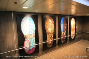 Anthem of the Seas - Art