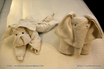 Norwegian Epic - Towel animal