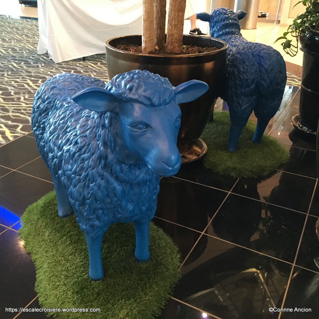 Independence of the Seas - Les moutons de la salle de sport