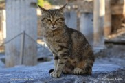 Ephese - Turquie (4)