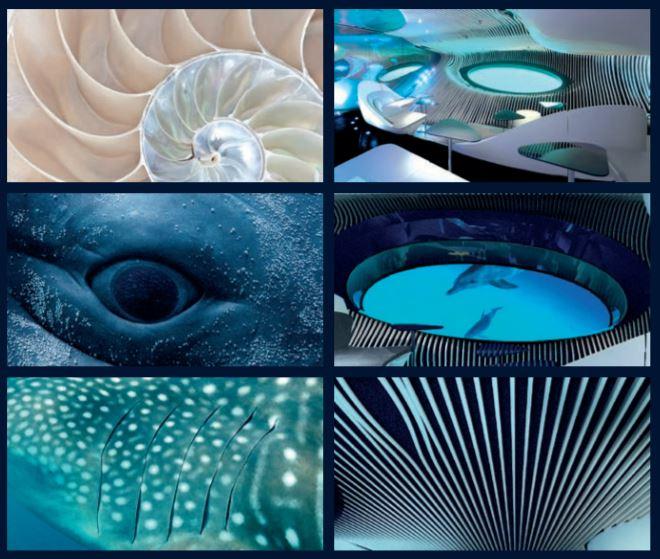 Blue Eye - Ponant Explorers