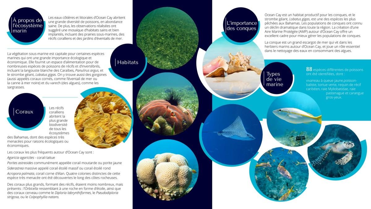 Ocean Cay MSC Reserve Marine - Chiffres et infos nature