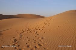 Abu Dhabi - Dunes et Désert en 4x4