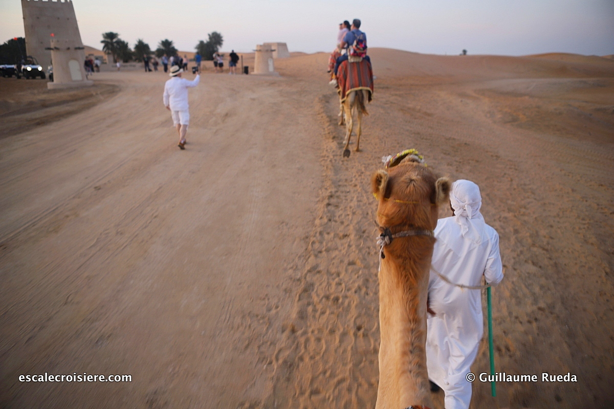 Abu Dhabi - Désert chameaux