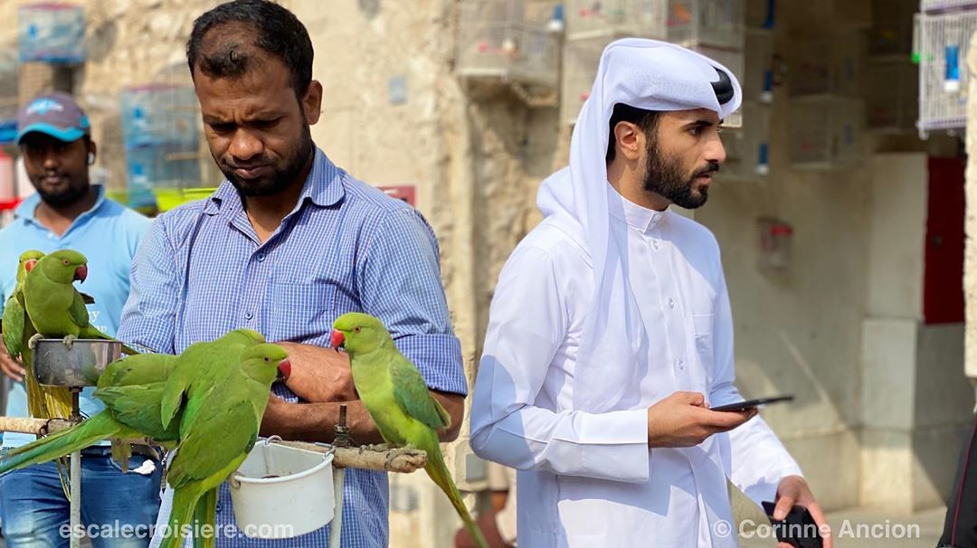 Souk Waqif - marché aux oiseaux - Doha - Qatar (8)