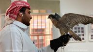 Doha - Qatar - Falcon hospital - Clinique faucons